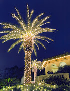 Scrumpdillyicious will be touring Florida's Gulf Coast over Christmas, . (palm tree with twinkle lights)