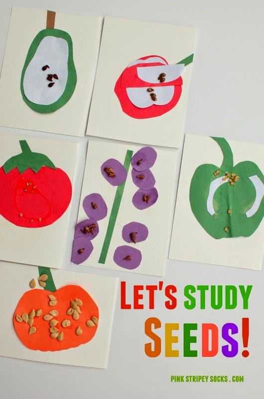 kids stem activity- studying seeds!
