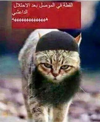 لا للوهابييين الارهابيين