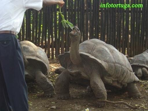 Tortuga en un zoo de Tanzania