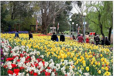 Australia Flower Festival