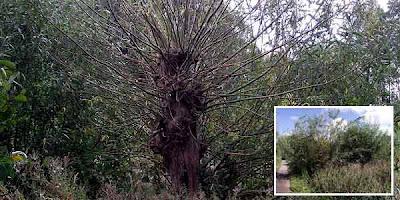 Pohon Langka Ini Hanya Ada Satu Di Dunia [ www.BlogApaAja.com ]