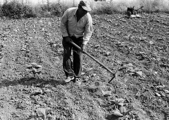 tsapi-δουλειά σκληρή-χωράφια