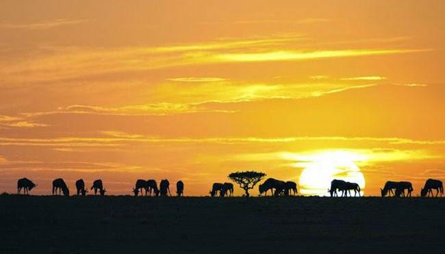 tanzania naturaleza áfrica