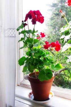 Rakkautta ikkunalaudalla...