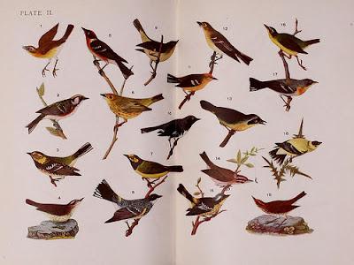 birding by ear pdf