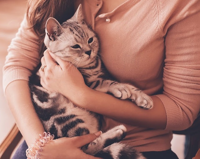 5 Ways Cats Show Their Affection