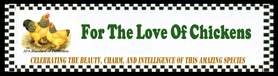 For The Love Of Chickens - Blog
