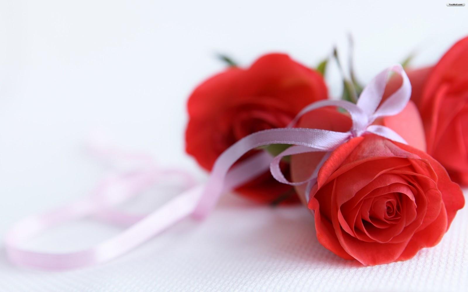 http://1.bp.blogspot.com/-M0QxSHj3NmM/T9V1nmDNDJI/AAAAAAAAFfI/H1X-6n7IC-I/s1600/Rose-Wallpaper-63.jpg