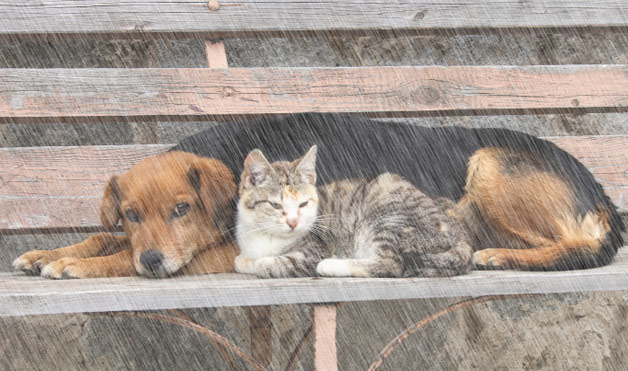"marriage in story of an hour and cat in the rain The marriage the physical drain wife in ""cat in rain"" wife in ""powder"" louise & brently mallard kate chopin: ""the story of an hour."