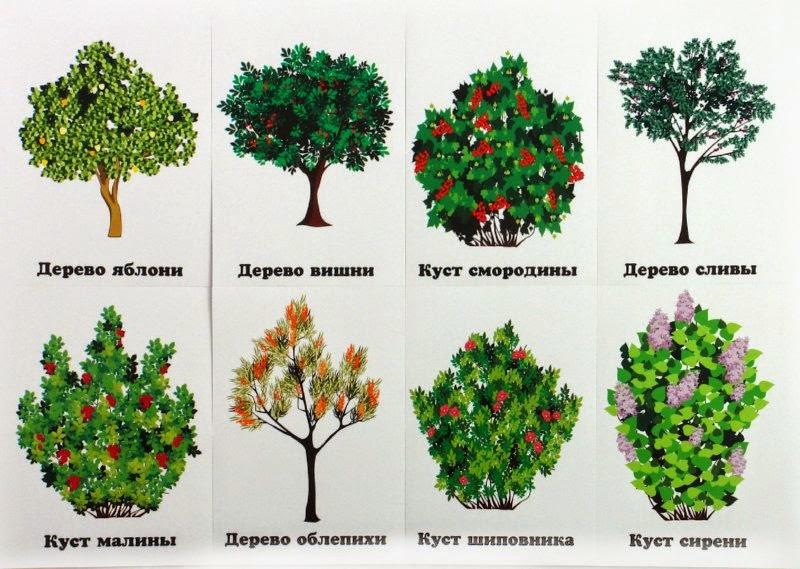 и деревья в описание картинках их