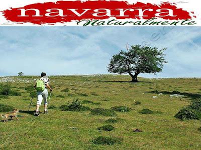 Los propietarios de mascotas, en cada época vacacional se les plantea un problema con su ser más querido, que es su mascota.  No me refiero aquellas personas que no saben o no quieren, llevar a sus mascotas de vacaciones con ellos, sino a los que quieren hacer Turismo Rural y no encuentran alojamientos que acepten a sus mascotas.  Este es un tema controvertido, especialmente en algunas CCAA como Navarra.  En Navarra Naturalmente, es difícil encontrar, Casas Rurales que acepten viajeros con mascotas, y que faciliten las estancias sin poner trabas a los viajeros.