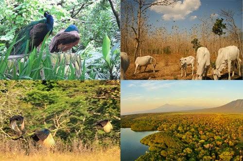 Contoh Satwa di Taman Nasional Baluran