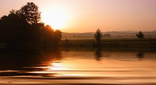 foto di una siepe vicino a un lago
