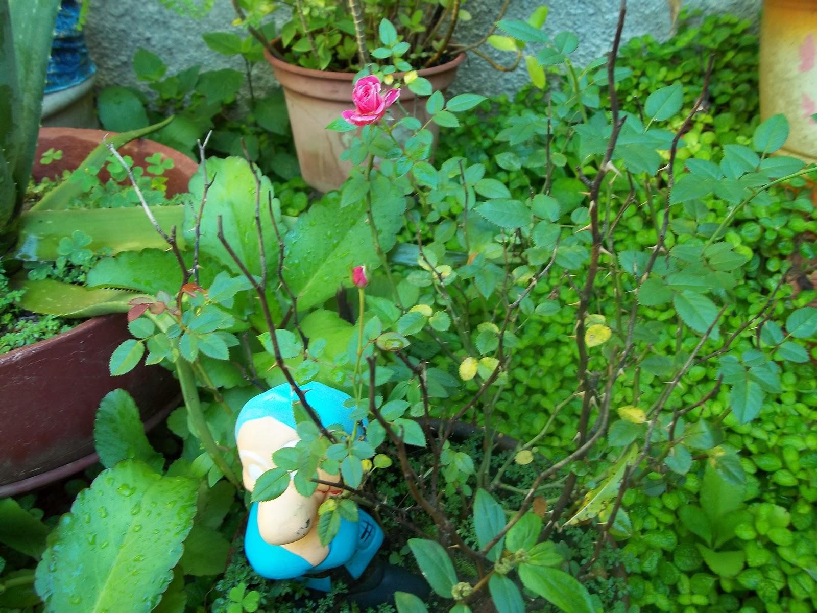 As flores do meu jardim