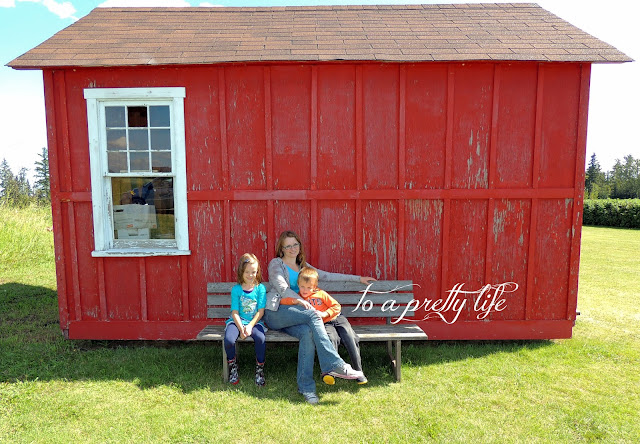 photography photos pictures raspberries berry picking august summer rustic farm bench chippy farmhouse
