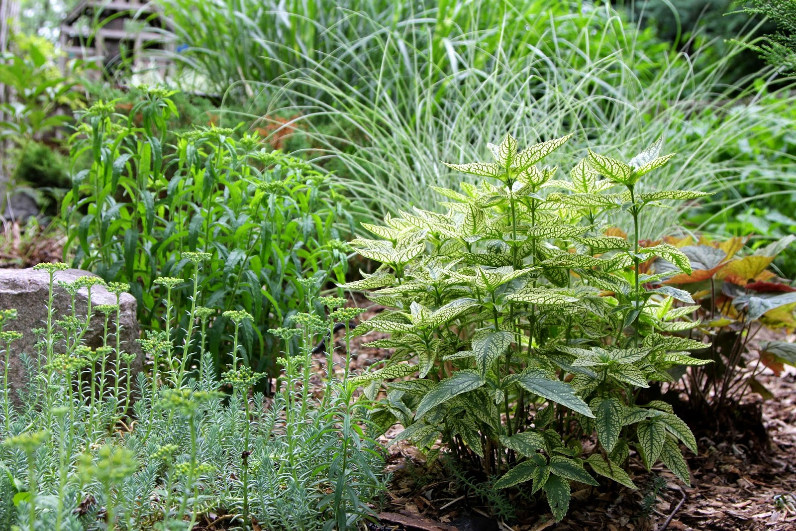 the little backyard farm tips for planting perennials and tour