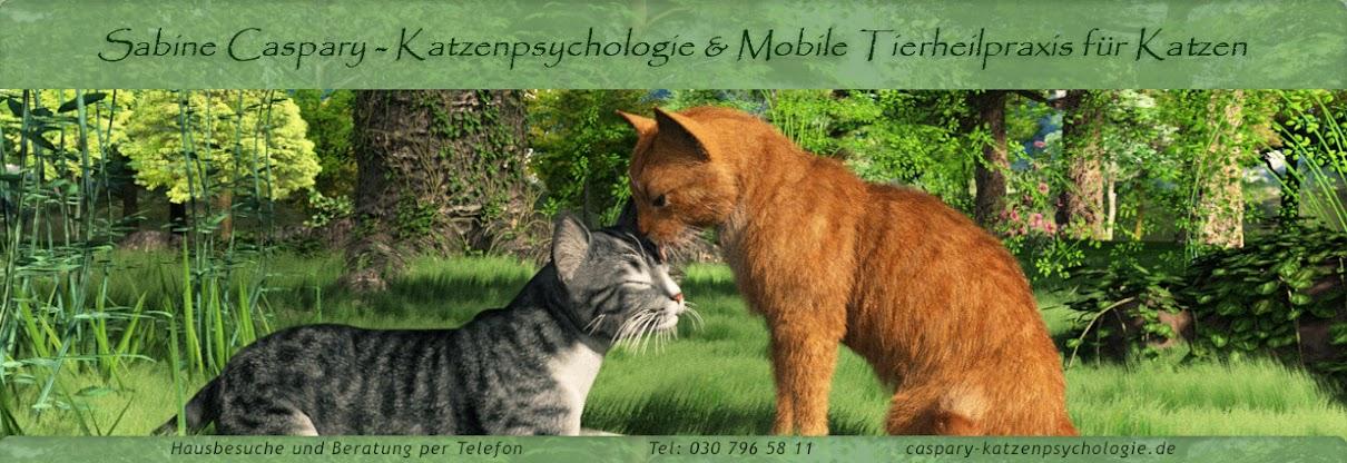 Katzenpsychologie S. Caspary - Tipps für Katzenhalter