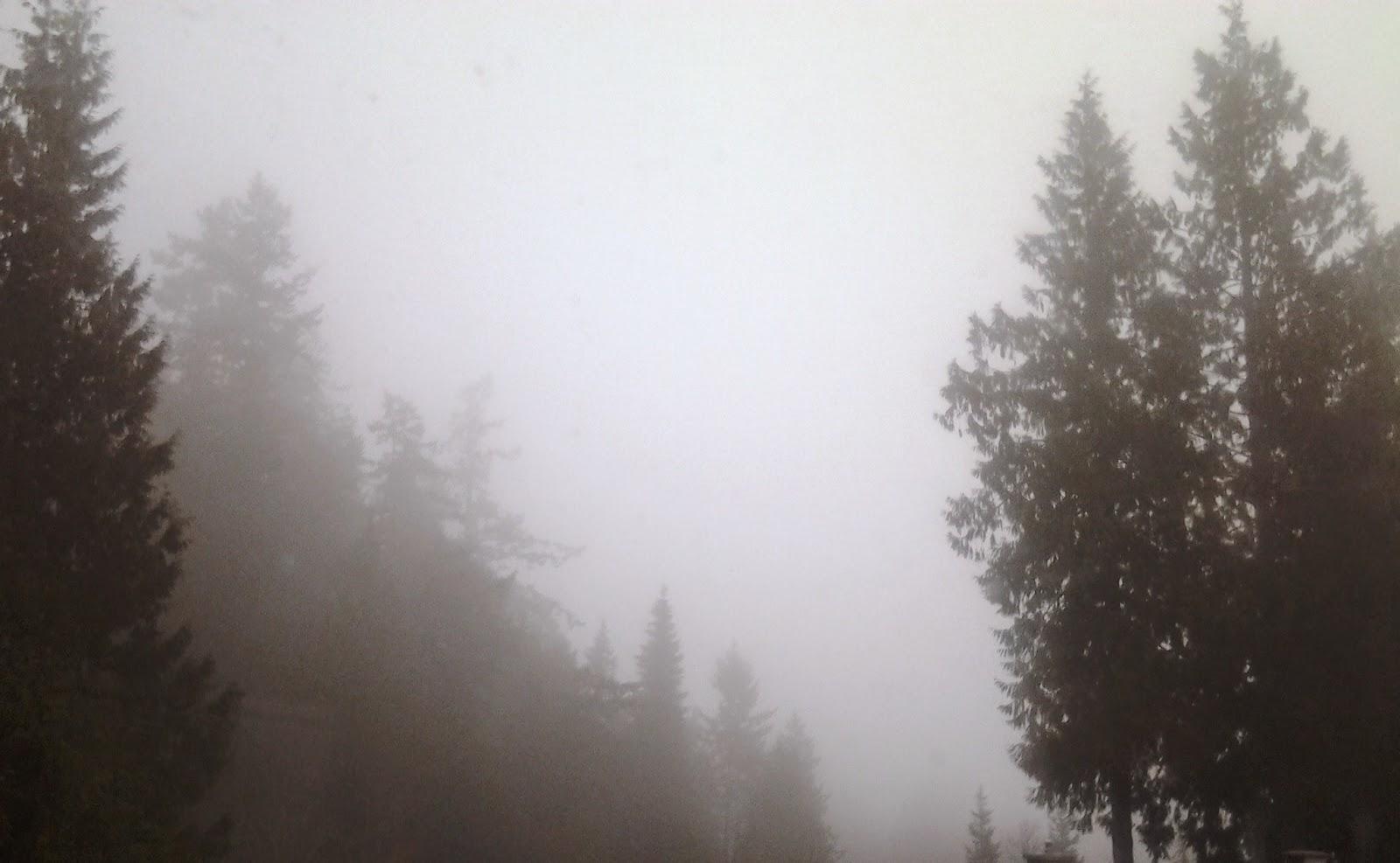 fog vancouver island