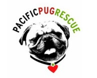 Adopt a Pug!