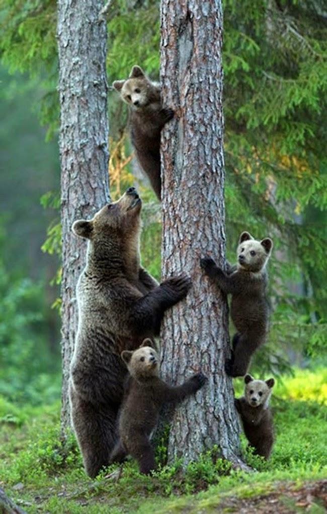 الحيوانات desktop-1425574592.jpg