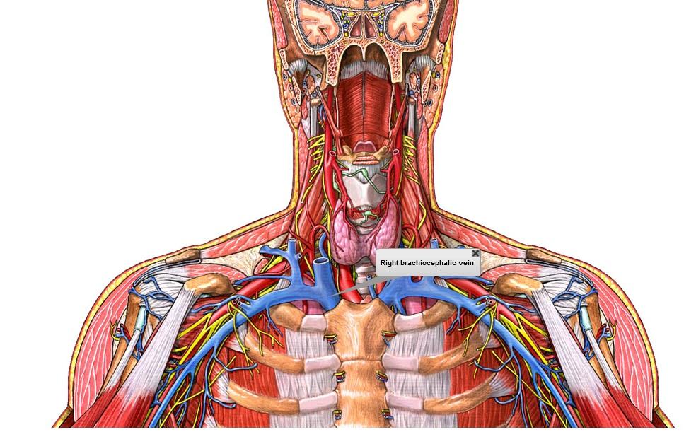 tarea venas y arterias | clases de sistemas mony