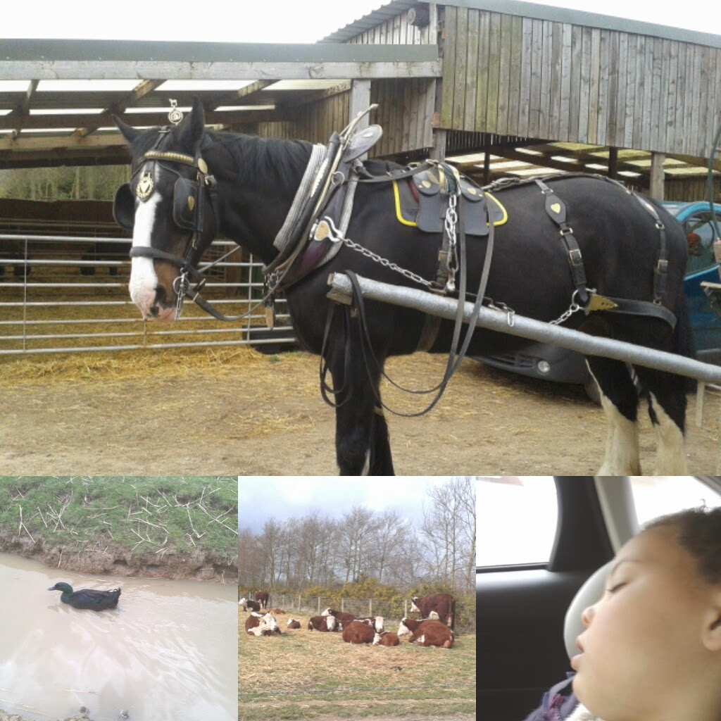 Tommy in his bridle, a duck, some cows and a sleeping madam