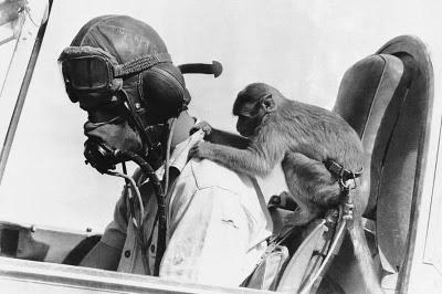 Gambar-gambar Lucu monyet