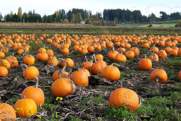 A models secrets pumpkin diy beauty recipes for skin face and if you dont want to make pie why not use the leftovers to look better than ever with these quick and easy do it yourself pumpkin beauty recipes solutioingenieria Images