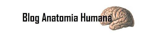 Blog Anatomia Humana