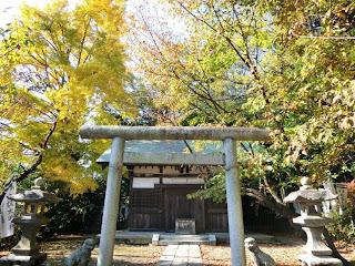 白旗神社のイチョウ