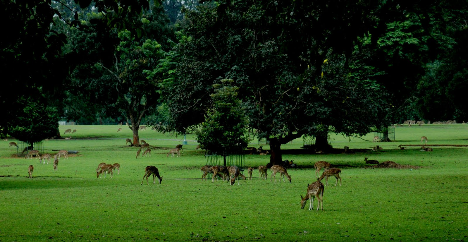 ... Raya Bogor, berikut ada beberapa tempat wisata bogor yang paling bagus