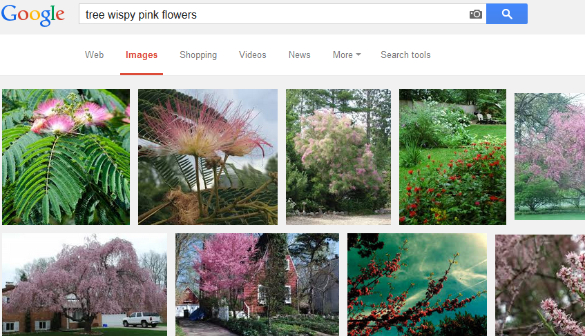 Not Quite Sure The Technical Term To Describe Flowers I Just Took My Best Guess And Entered Following Into Google Images Tree Wispy Pink