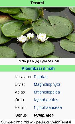 Sekitar 50 species nama Latin dari Teratai