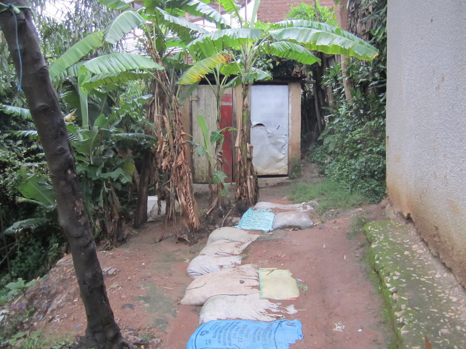 Heres a view of the pit latrine that all the houses in my compound shared a compound is just a name for a common piece of land with several buildings