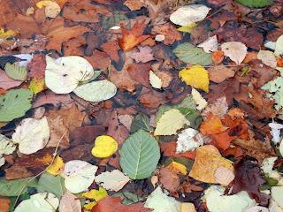 Fallen leaves in Lincoln Lake