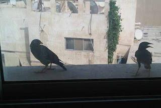 memberi-makan-burung