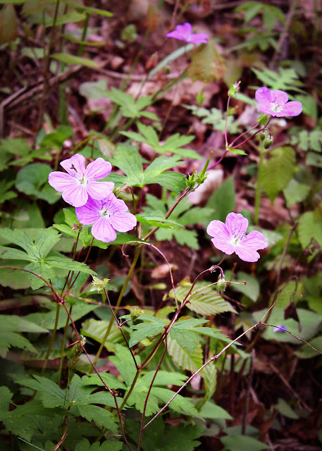 West Virginia wild flowers nature photography