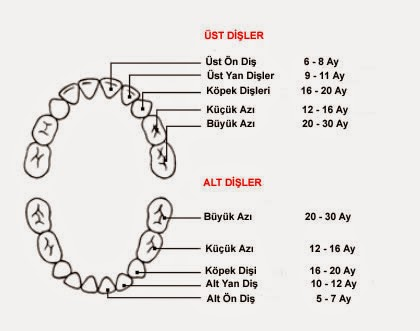 Minik Dişler