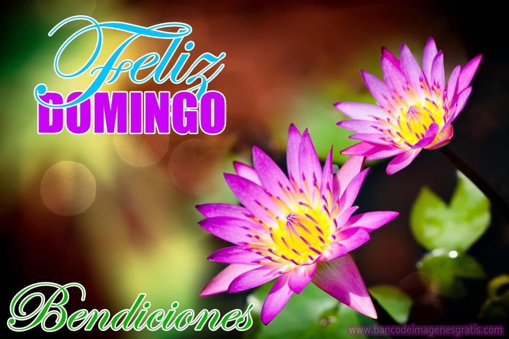 """BANCO DE IMAGENES: Imágenes con mensajes de """"Feliz Domingo"""" y flores"""