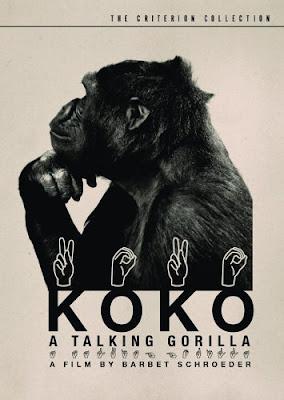 Poeter Koko, Gorilla yang bisa bicara
