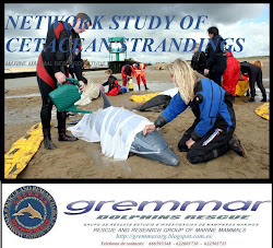 NETWORK STUDY OF CETACEAN STRANDINGS