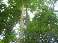 O Parque Trianon é a única reserva remanescente da Mata Atlântica da região.