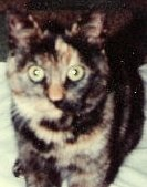 Kun Tiina-kissa sai kodin