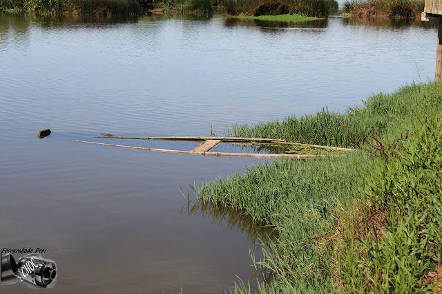 Fotografia de um lago onde se podem encontrar barcos submersos.