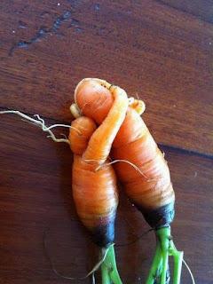 suplemento cenoura