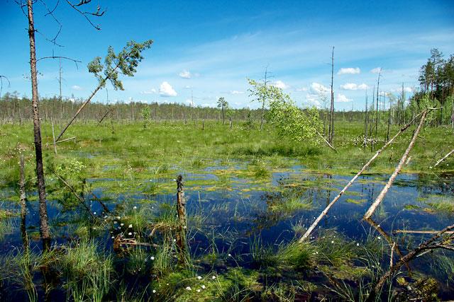 торф, торфяные болота