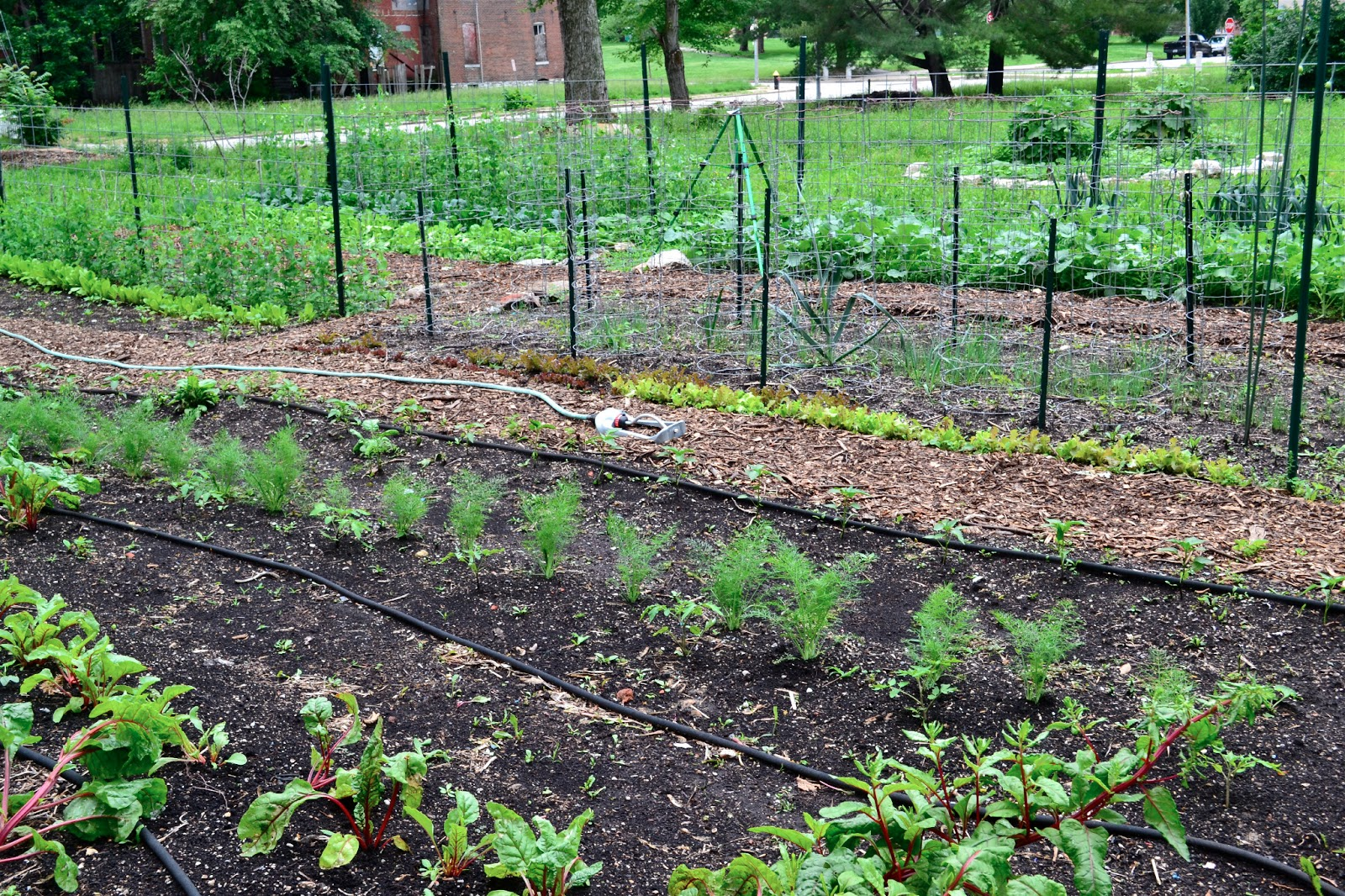Community garden in Hyde Park neighborhood of St. Louis City