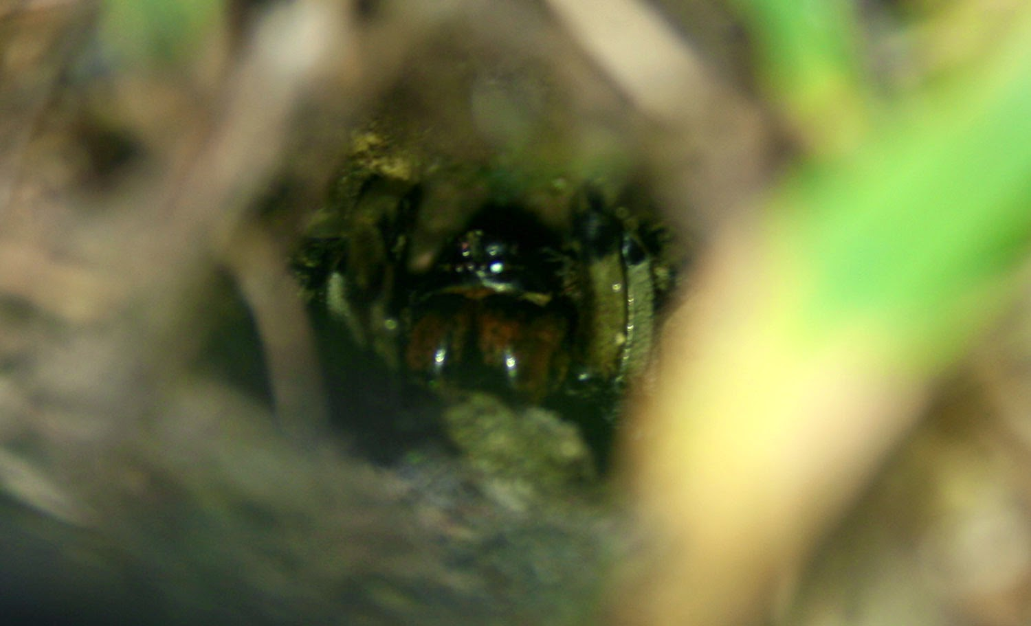 A spider down his hole