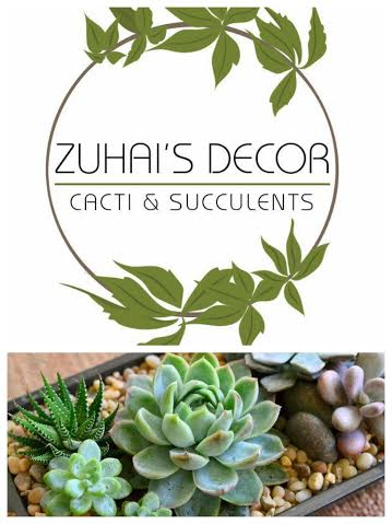 zuhai's live cacti & succulents decor
